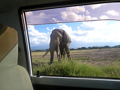 Affordable Day trip to Amboseli National Park