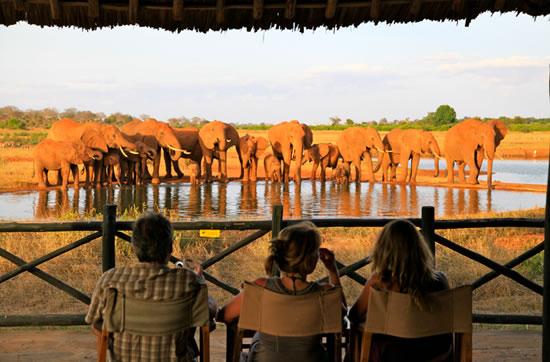 Affordable Kenya Luxury Safari Accommodation At Voi Wildlife Lodge Tsavo East National Park